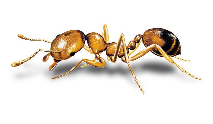 Obrázok mraveniska